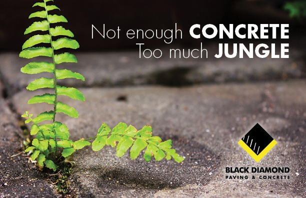Marketing and advertising materials for Black Diamond Paving & Concrete, postcard design showing weeds sprouting out of a cracked sidewalk and the words Not enough concrete too much jungle
